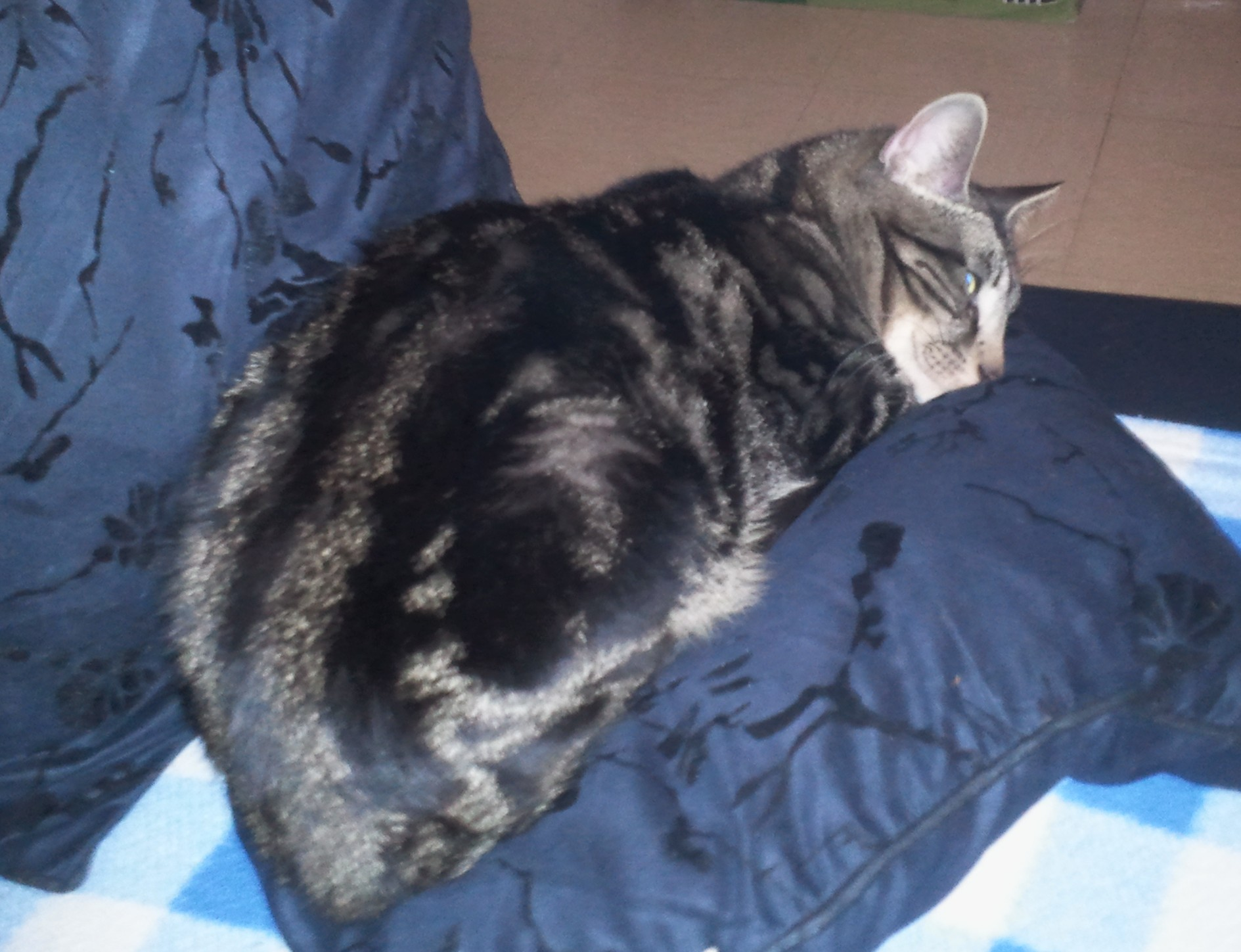 Chat moselle