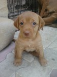donne adorable chiot, sablet - photos 3